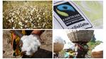 [Engagement] Le Groupe Elis à la 8ème place du classement mondial des acheteurs de coton biologique équitable
